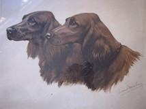 "Antique engraving ""Irish Setters"""
